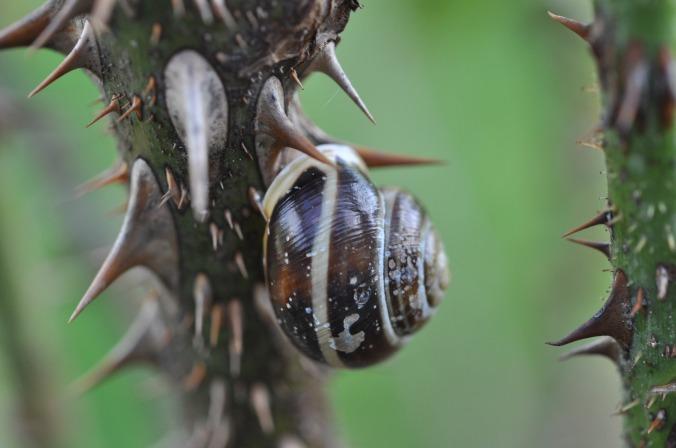 snail-1666025_1920