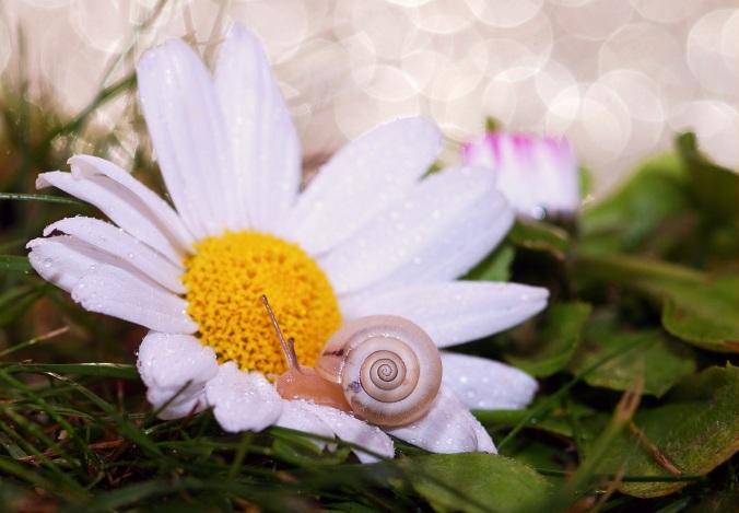 snail-582203